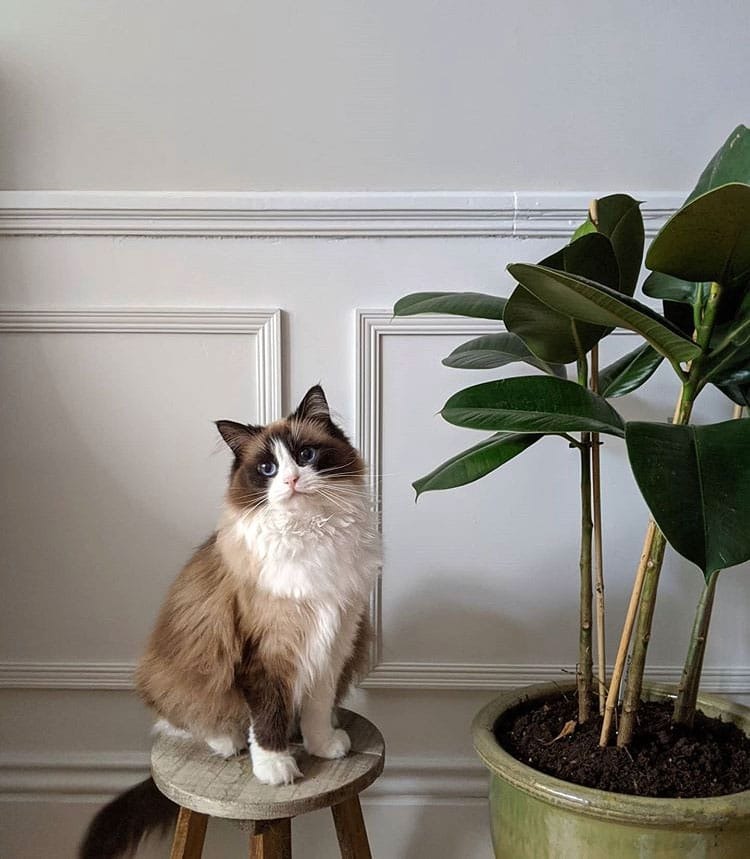 Image of a cat sitting on a stool with a plant to the side